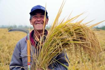 Annual rice yield to remain above 200m tons